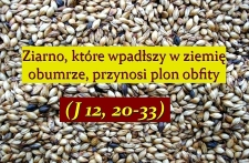 ziarno5.jpg