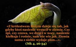 krolestwo_11_06-2018.jpg